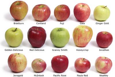 Όλα τα είδη μήλων!